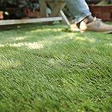 グラムスタイル 人工芝サンプル 夏色