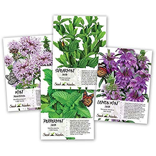 500Mint Seed Collection/Seed Collection (Peppermint, Spearmint, Pennyroyal Mint & Lemon Mint) Mix Package Non-GMO Seeds