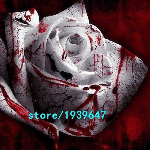 AGROBITS 100PCS semences Rarest blanc Sang Rose Plante Graines de fleurs Flower Garden Asaka Rare sang véritable graine Rose: Autre