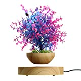 Macetero magnético flotante bonsái para plantas en maceta, decoración de aire, suspensión flotante para el hogar