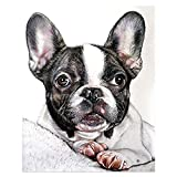 5D Diamond Painting Kit DIY Diamond Drawing Painted French Bulldog Round Diamond Embroidery Cross Stitch Mosaic Home Decoration Gift 15.7×19.7Inches