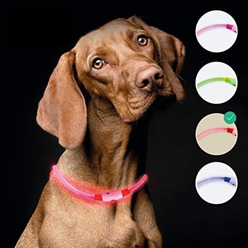 riijk LED Leuchthalsband Hund extra stark Leuchtend | Super lang haltbar durch Lichtleiter-Technologie | regenfest | Leuchthalsband Hund Langhaar und Kurzhaar | USB wiederaufladbar