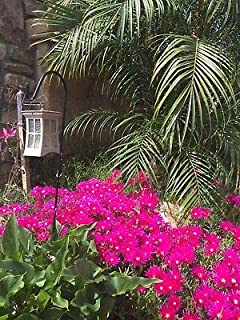 Best ice flower plant Reviews