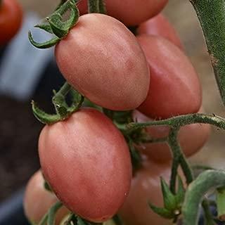 Thai Pink Pear Tomato 50 Seeds
