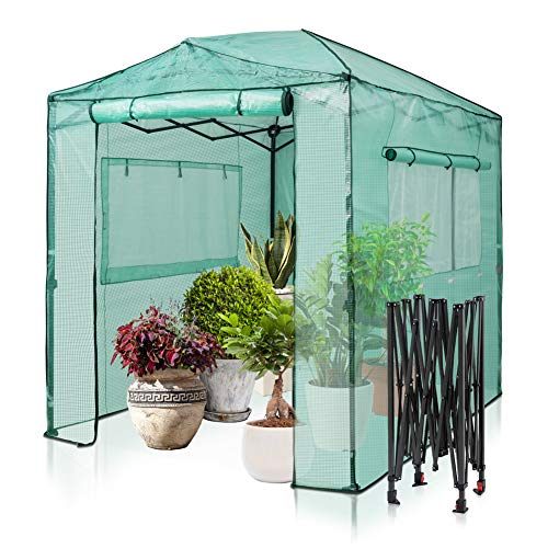 EAGLE PEAK 8' x 6' Portable Walk-in Greenhouse Instant Pop-up Fast Setup Indoor Outdoor Plant Gardening Green House Canopy, Front and Rear Roll-up Zipper Entry Doors and 2 Large Roll-Up Side Windows