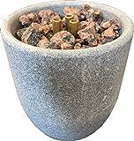 Weigand Sauna Brunnen XL US esteatita para la Sauna I Bonito, Calmante experiencia para los sentidos I Sauna accesorios I accesorios I Sauna springbrunnen I humidificación piedra I regalo I Brunnen XL