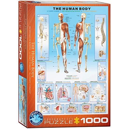 Eurographics Human Body Puzzle