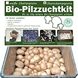 Bio Champignons einfach selber züchten als Komplettset im Pilzzuchtkarton -