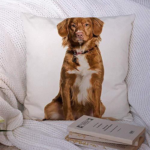 N\A Dekorative Kissenbezüge für Schlafsofa Couch Braun Weiß Nova Scotia Duck Tolling Retriever Sitzende Tiere Kein Wildlife Hundehalsband Alleine Themen Weicher Kissenbezug