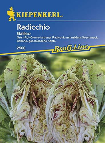 Salatsamen - Radicchio Galileo von Kiepenkerl [MHD 01/2019]