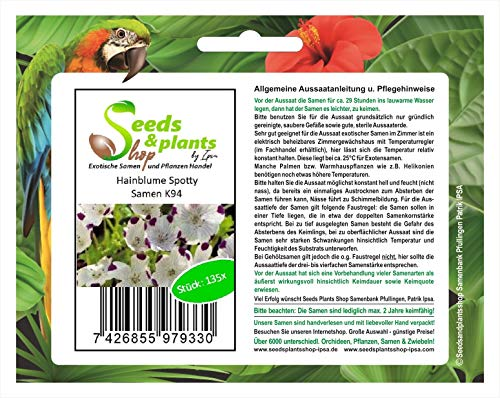 Stk - 135x Hainblume Spotty Nemophila maculata Samen Garten Blume Saat K94 - Seeds Plants Shop Samenbank Pfullingen Patrik Ipsa