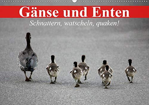 Gänse und Enten. Schnattern, watscheln, quaken! (Wandkalender 2021 DIN A2 quer)