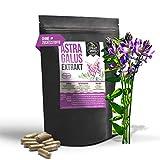 Astragalus EXTRAKT • 240 KAPSELN • 4000mg normales Tragant Pulver durch 10:1 Extrakt • vegan • ohne Zusätze Füll- und Fließmittel