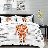 biancheria da letto - Set copripiumino, Anatomia umana, Schema del sistema muscolare Uomo Caratteristiche del corpo Elementi biologici Medical Heath Imag, Set copripiumino in microfibra con 2 federa 5
