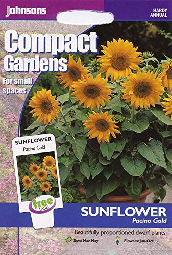 Johnsons Seeds - Pictorial Pack - Fleur - Tournesol Pacino Or - 20 graines