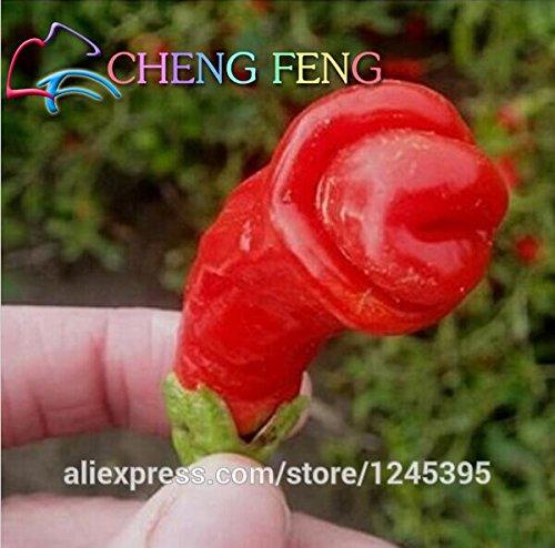 100 Pcs / paquet Jardin Plantes Paprika Peter Pepper Seeds Red Hot Chili Vegetable Seed Indoor Casseroles Décoration extérieure