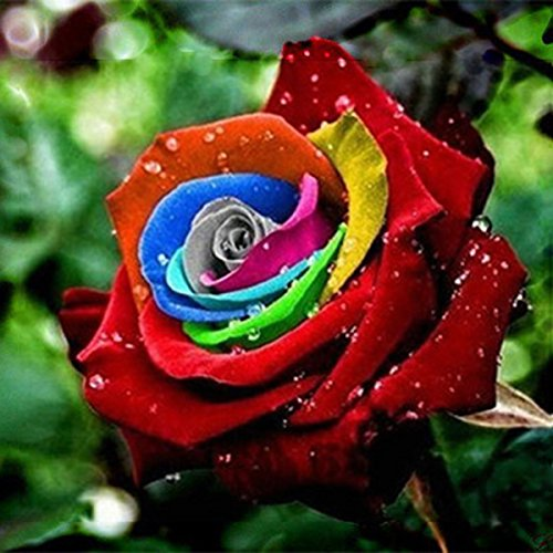 Inovey 200Pcs Rainbow Rose Seeds Rare Colorful Flower Potted Plant Garden Bonsai - #1
