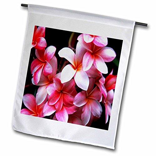 3dRose fl_62165_1 Hawaiian Fuchsia Colored Plumeria Flowers Garden Flag, 12 by 18-Inch