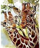 ZXlDXF Pintura de jirafa por números, colorido lienzo de regalo, pintado a mano, decoración del hogar, regalos de 40,6 x 50,8 cm
