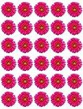 30 flores rosas gerberas comestibles obleas de papel para tartas de cumpleaños