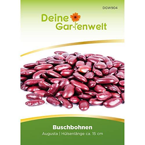 Kidneybohnen Samen | Buschbohnen Augusta | Bohnensamen | Saatgut für Bohnen