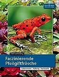 Faszinierende Pfeilgiftfrösche: Lebensraum, Haltung, Nachzucht...