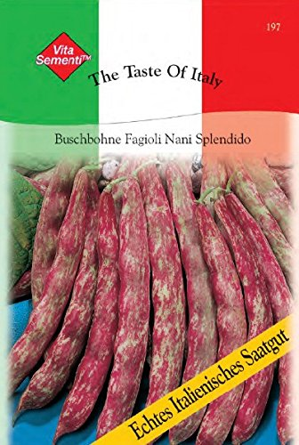 Bohnen - BuschBohnen - - Fagioli Nani Splendido (Borlotto Bohne) von T & M