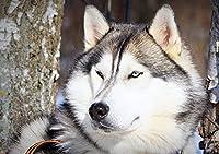1000ピースジグソーパズル、木製ジグソー、アラスカそり犬、耐久性のある木製パズル。 家族のレジャーおもちゃ、家族の装飾、カップル間の贈り物