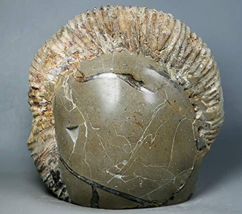 3.6Lb Natural Septarian Dragon Stone&Amp; Ammonite Fossil Conch Crystal Specimen
