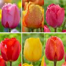 Tulips & Daffodils!