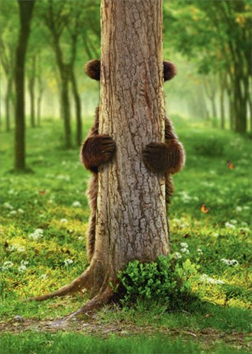 Brown Bear Peek A Boo - Avanti Funny Goodbye Card