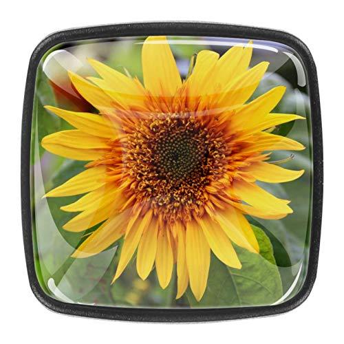 4 pomos cuadrados de metal para armario, cajón, puerta, tiradores de girasol, flores amarillas