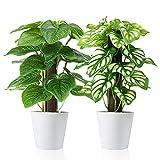 SOGUYI Plantas Artificiales 24 cm Plantas en macetas de plástico Falso Decoración de Plantas Altamente Realista Decoración Moderna para el hogar Oficina Hotel Cocina Jardín (Paquete de 2)