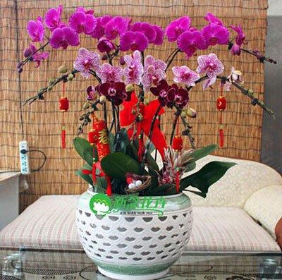 Fleur exotique Orchidée Graines Cattleya Multicolor Papillon Orchidee Bonsai Monoflord Mini jardin plante facile à cultiver 200 pcs/sac 16