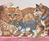Cats Kittens with Green and Blue Collars on Pink Bench Wallpaper Border Retro Design, Roll 15' x 9'