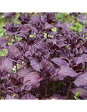 Benoon Purple Shiso Seeds, 100Pcs / Bag Purple Shiso Seeds Non OGM Colores Brillantes Bajo En Carbohidratos Excelente Planta De Producción Semillas De Perilla Para Jardín Semilla