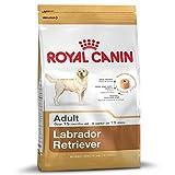 Royal Canin Labrador Retriever - Comida para perros secos para adultos de 15 meses o más - Paquete de 2 x 12 kg