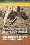 Cómo Adiestrar a Un Perro de Raza Galgo Español: Adiestramiento Fácil de un Galgo Español