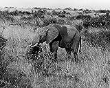 Elephant Uganda Poster Drucken (45,72 x 60,96 cm)