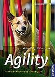 Agility: Vom ersten Hindernis bis zum Parcours