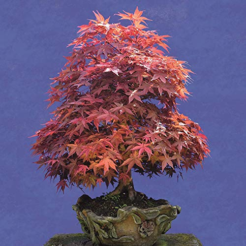 16 Month 2021 Bonsai Wall Calendar with 108 Reminder Stickers (12 x 12 In)