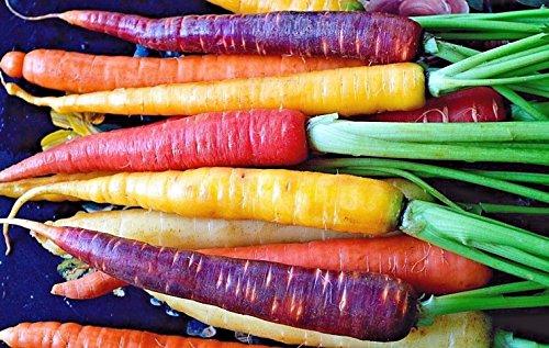 Arc-en-carotte Blend Mix, graines, coloré, NON-OGM, tailles Variété,