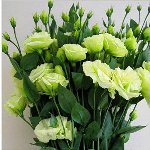 200pcs rares graines blanches Eustoma vivaces plantes à fleurs Balcon fleurs en pot Graines lisianthus pour planteur de pot de fleurs 6