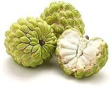 10 piezas de semillas de Annona Semilla de manzana de azúcar de fruta con forma de pera reliquia ?chirimoya? para plantar jardín al aire libre
