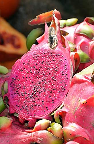 Seedeo® Rote Drachenfrucht/Pitahaya (Hylocereus costaricensis) 20 Samen