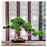 Planta Artificial Plantas Artificiales Bonsai Pine Tree, 16 Pulgadas Casa Faux Acogida de Pan Pot Pot Plantas, Simulación Pine for Office, Zen Garden Decoration Árboles Artificiales