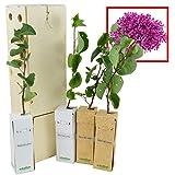ÁRBOL DEL AMOR de pequeño tamaño en caja de madera. Alveolo forestal (4)