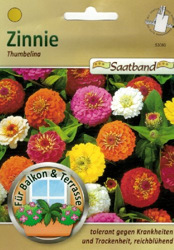 Zinnie 53080 Thumbelina Ruban de semences pour balcon et terrasse tolérant contre les maladies et la sécheresse