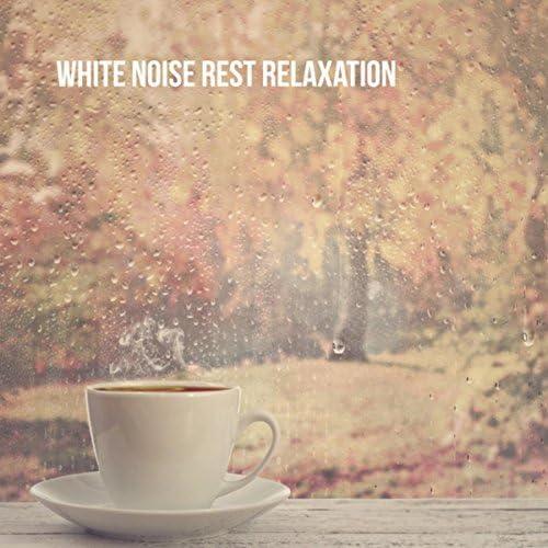 Relax Meditate Sleep, Relax & Zen Music Garden