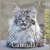 maine coon 2021: 2021 Wall & Office Calendar, 12 Month Calendar